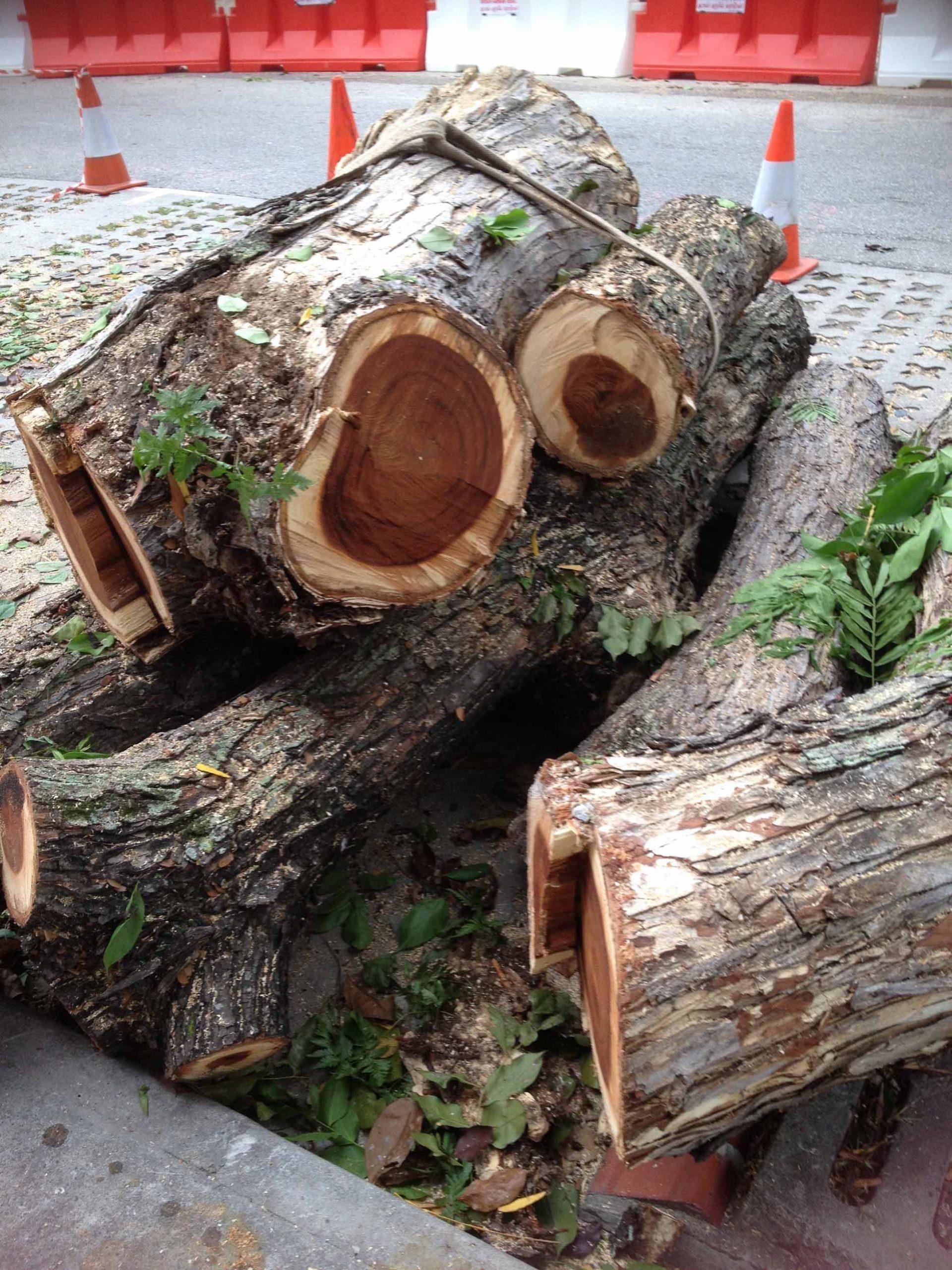 singapore felled trees
