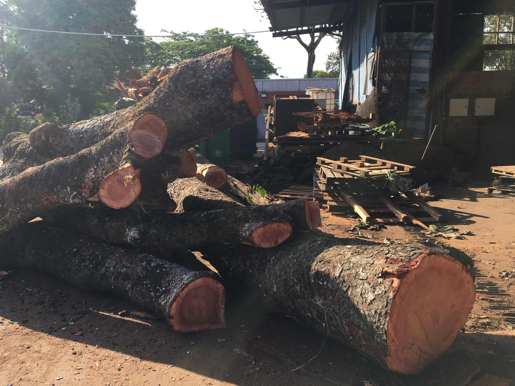 sustainable wood singapore from felled trees